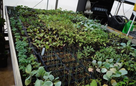 Students and faculty make campus community garden a reality