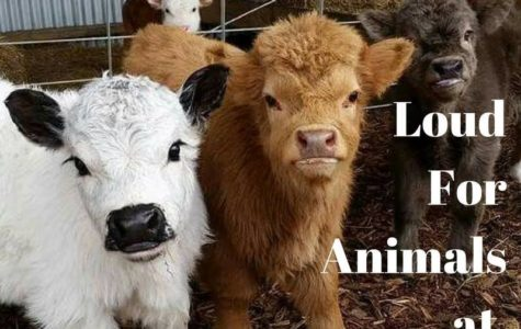 Student organization gets 'loud' for animal rights